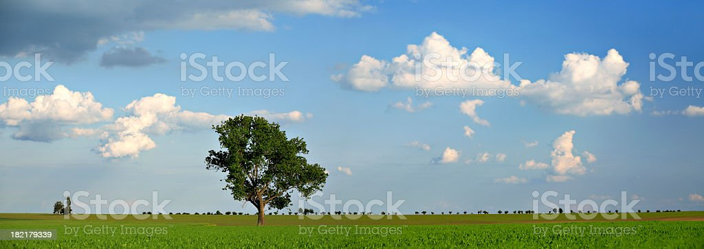 Panoramic Summer Landscape II royalty-free stock photo