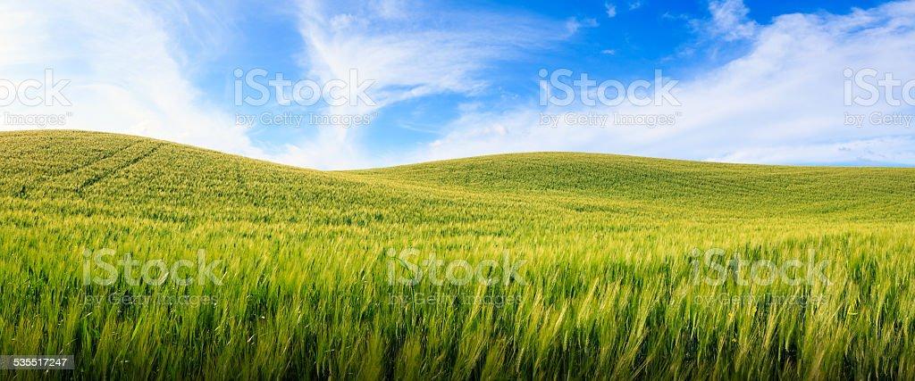 Panoramic Tuscany Field stock photo