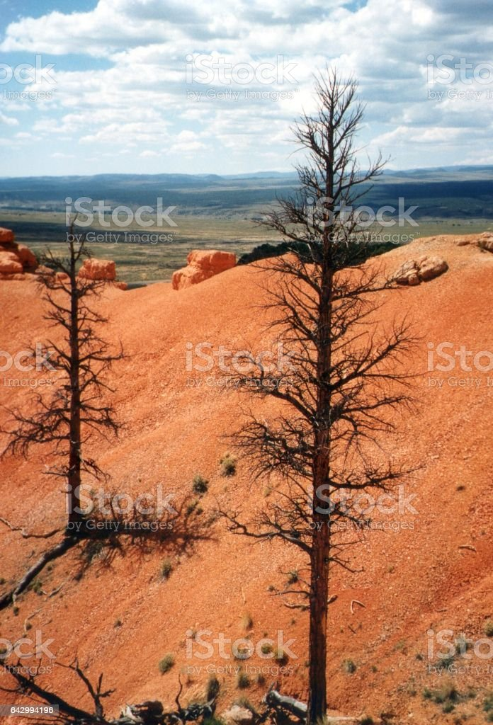 Panoramic view from Red Canyon, Utah, USA stock photo