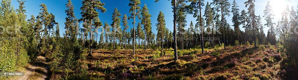 Panoramic View in Vaestergoetland West Gothland, Sweden stock photo
