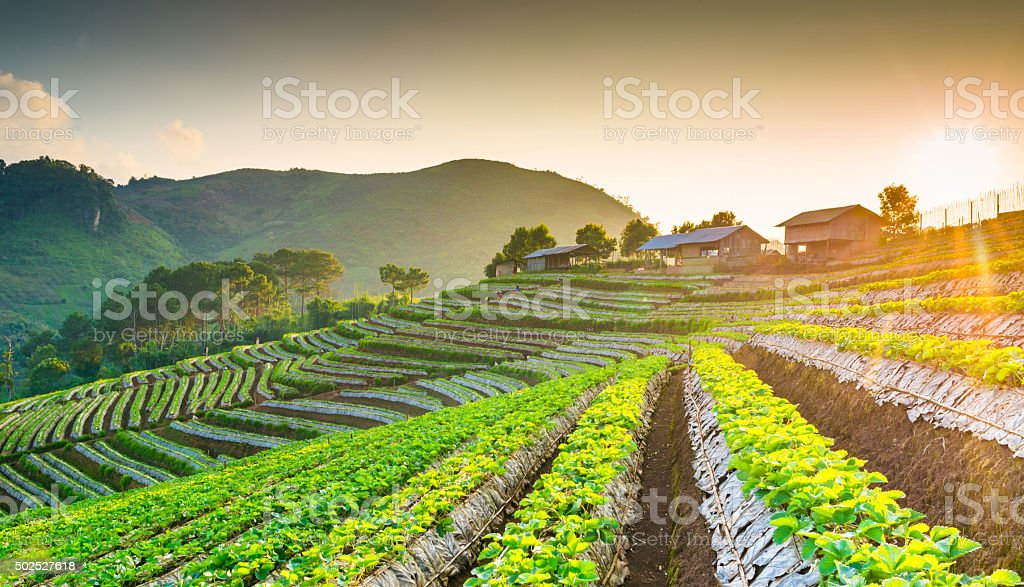 Panoramic view misty morning sunrise in mountain at north Thailand stock photo