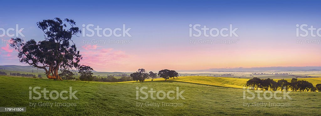 Panoramic view of a fresh green field stock photo