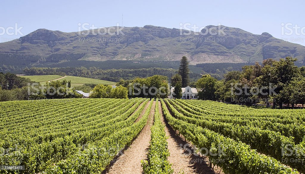 Panoramic view of a winery in South Africa stock photo