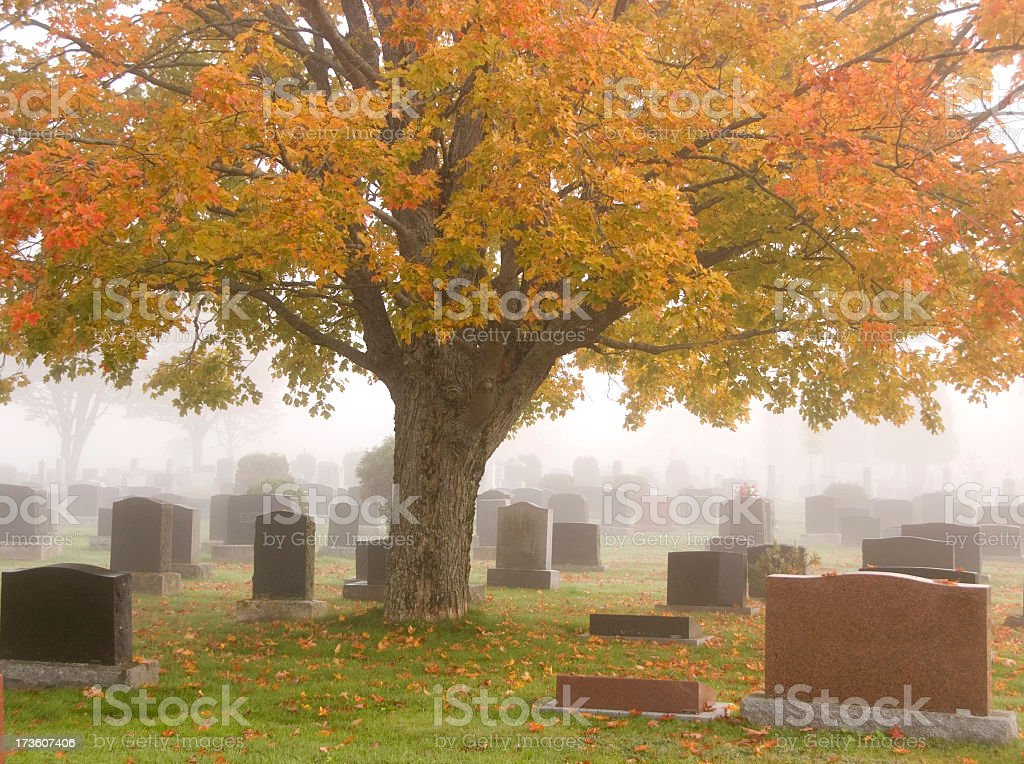 Panoramic view of cemetery under a giant sweet gum tree stock photo