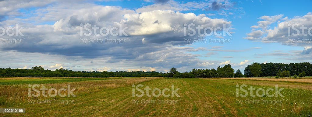 Panoramic view of field near the forest under blue sky stock photo