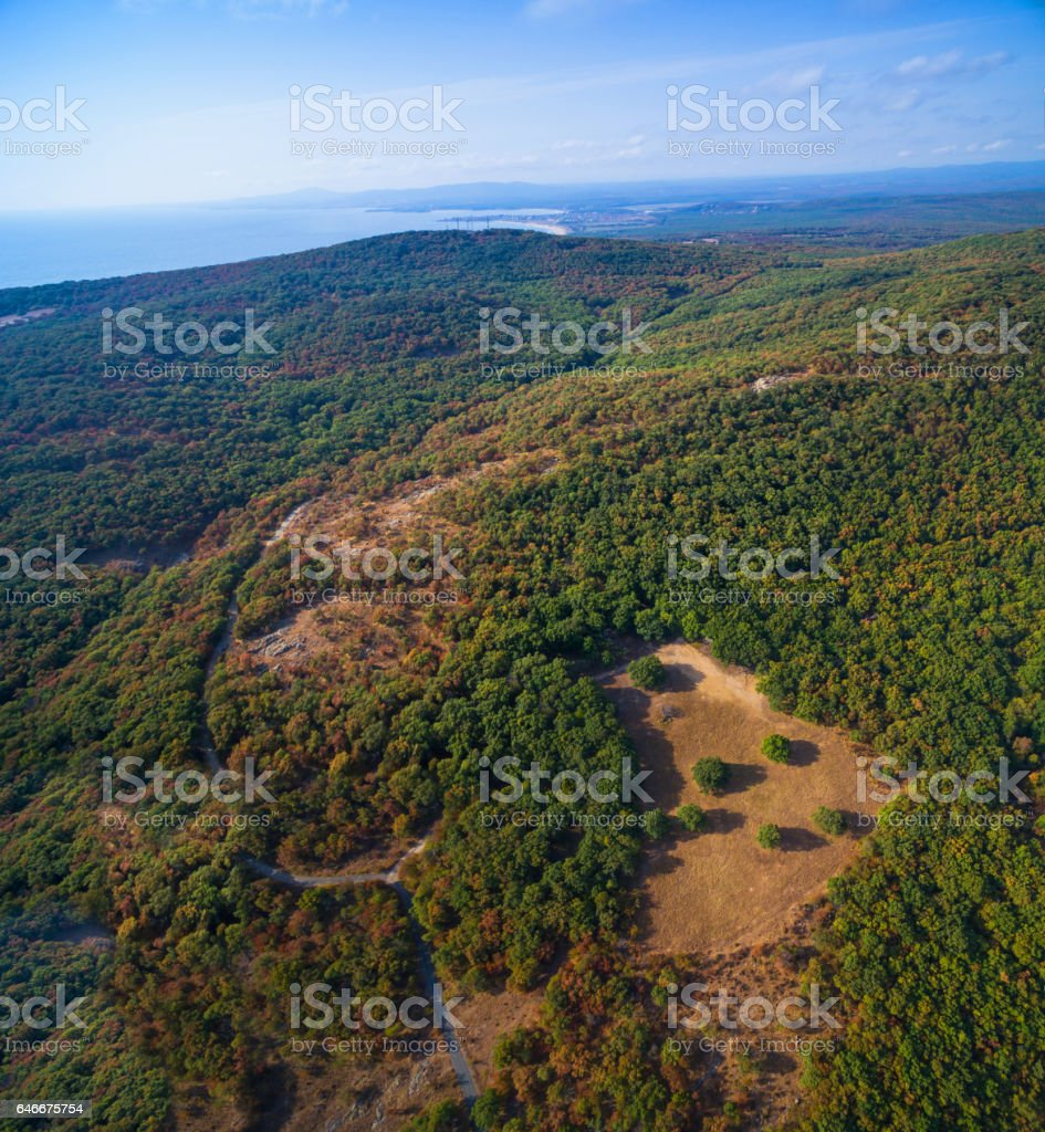 Panoramic view of green forest stock photo