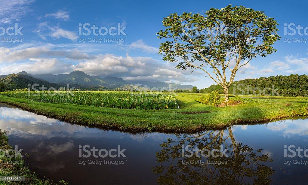 Panoramic view of Hanalei Valley in Kauai stock photo