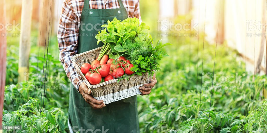Panoramic view of male hands holding a basket with vegetables stock photo