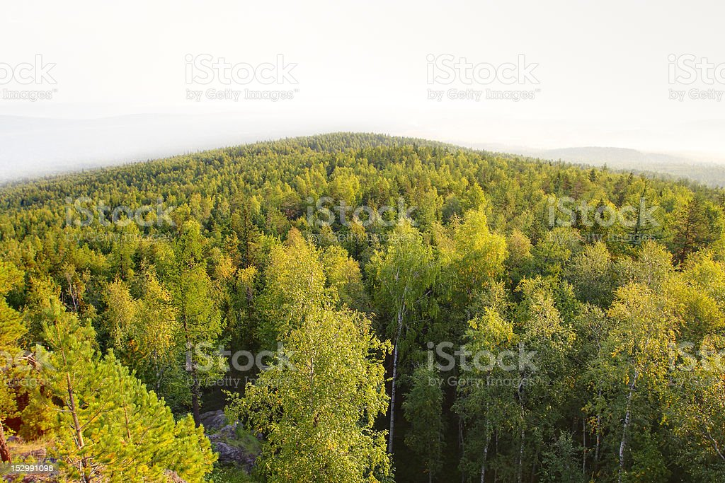 Panoramic view of mountain forest royalty-free stock photo