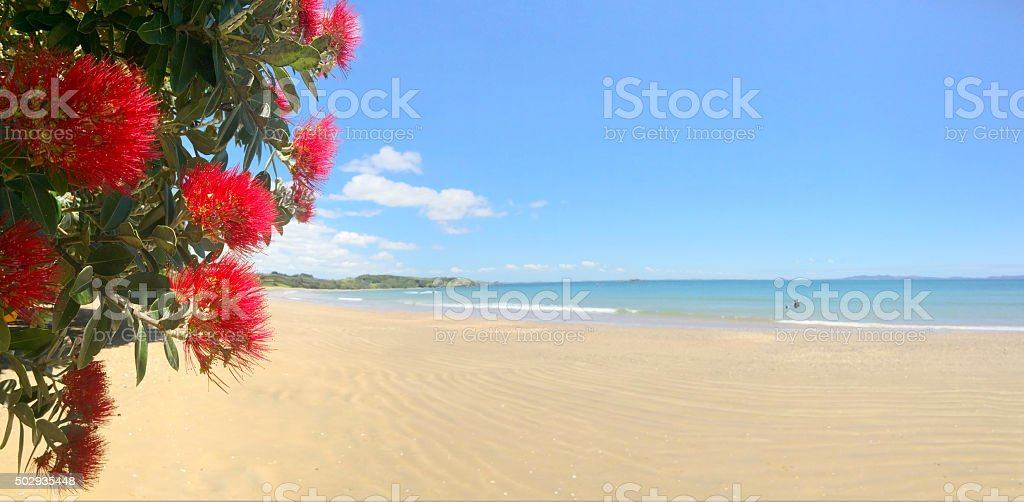 Panoramic view of  Pohutukawa red flowers blossom on December stock photo