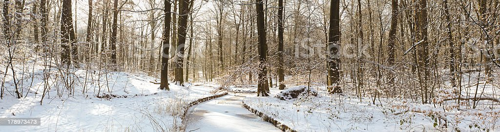 Panoramic view of snow covered forest royalty-free stock photo