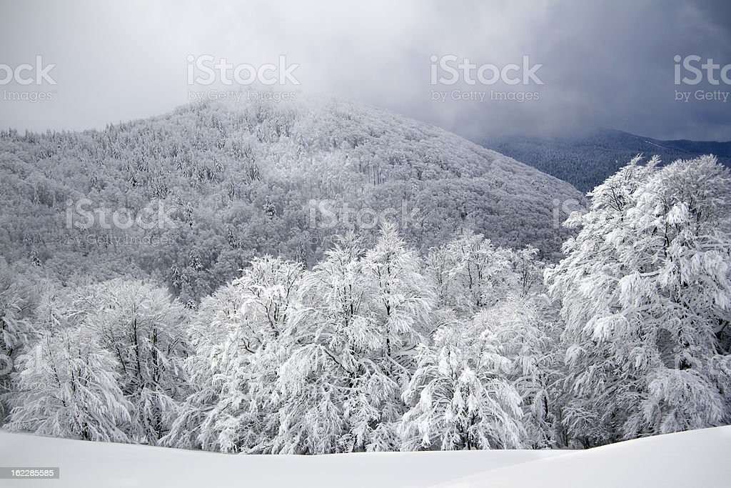 panoramic view of snowy forest mountains royalty-free stock photo