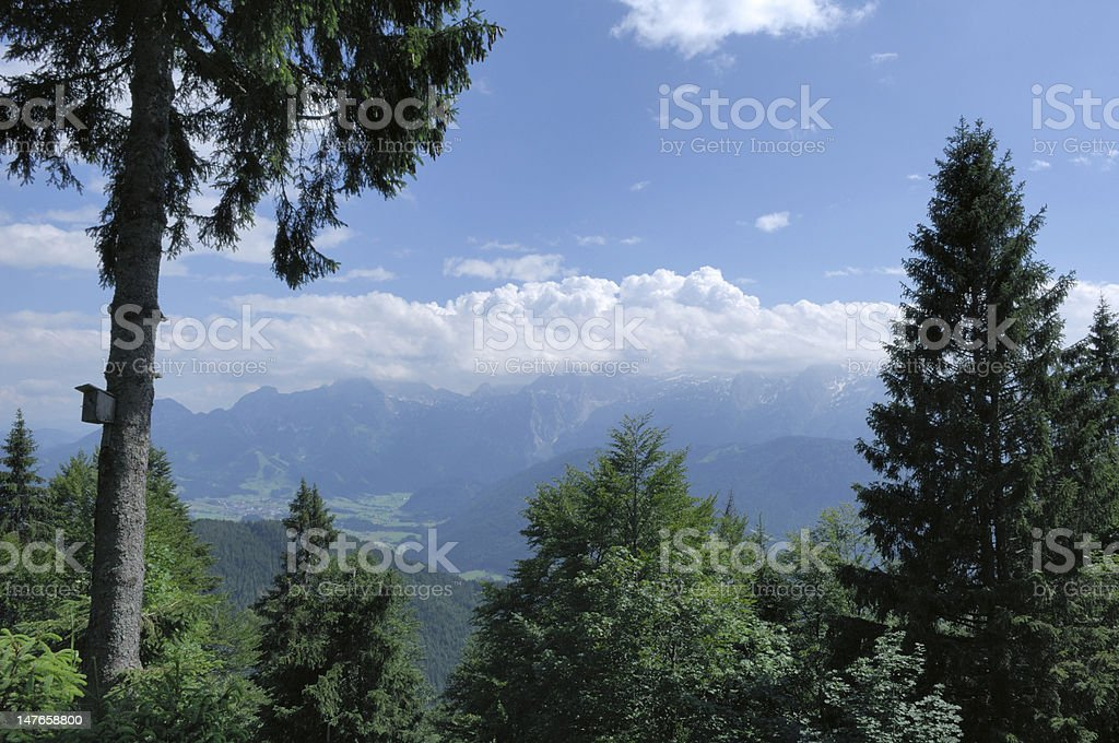 Panoramic View of the Alps with Forrest in Foreground. stock photo