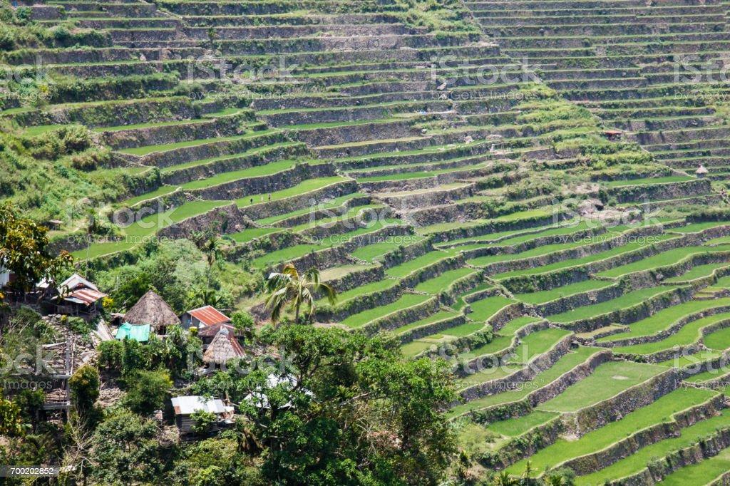Panoramic view of the Batad rice terraces, Banaue, Philippines stock photo