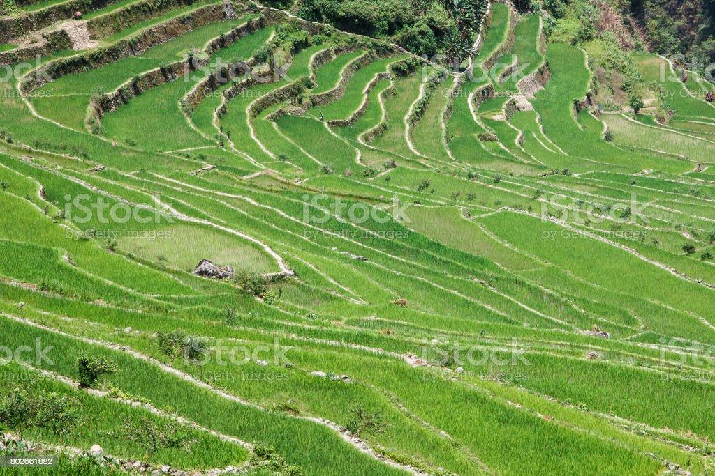 Panoramic view of the Batad rice terraces, Ifugao, Banaue, Philippines stock photo