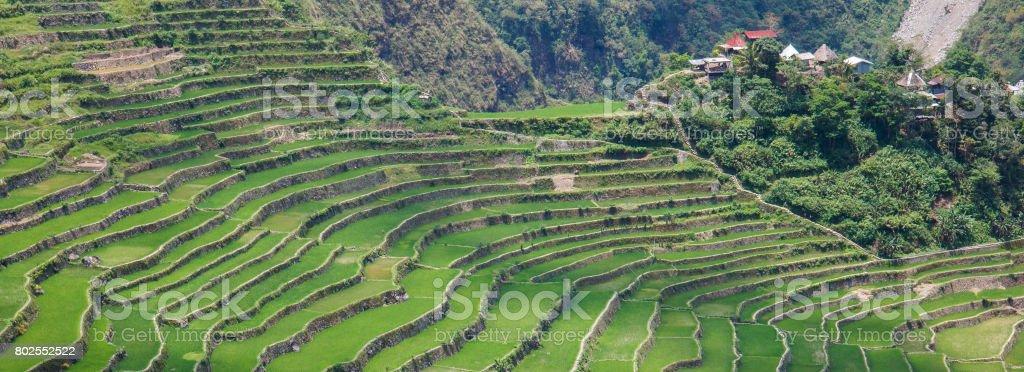 Panoramic view of the Batad rice  terraces,Ifugao , Banaue, Philippines stock photo
