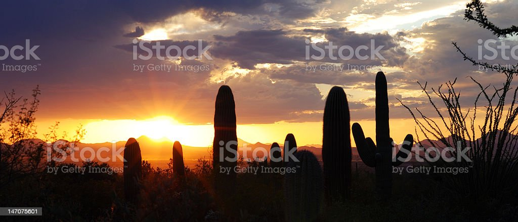 Panoramic View of the Desert royalty-free stock photo