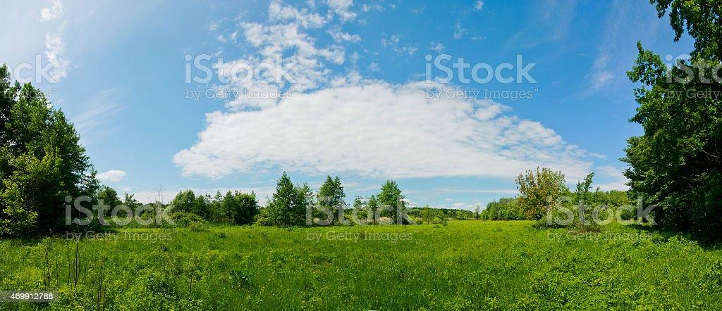 Vista panorámica de el prado del verano. foto de stock libre de derechos