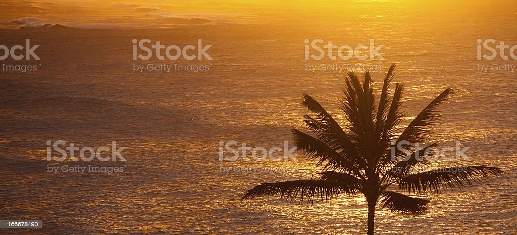 Panoramic view of the ocean and palm tree at sunset royalty-free stock photo
