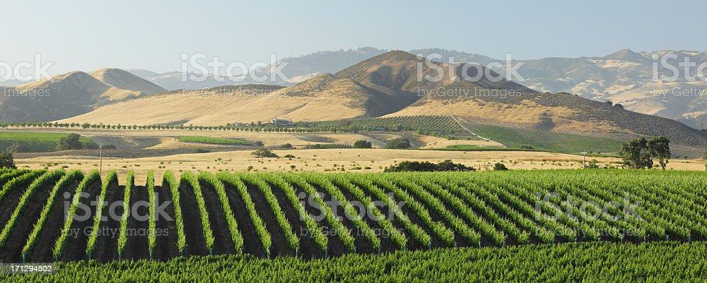 Panoramic view of the Santa Barbara Vineyard stock photo