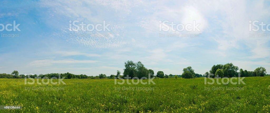 Vista panorámica de la primavera prado con flores amarillas de foto de stock libre de derechos