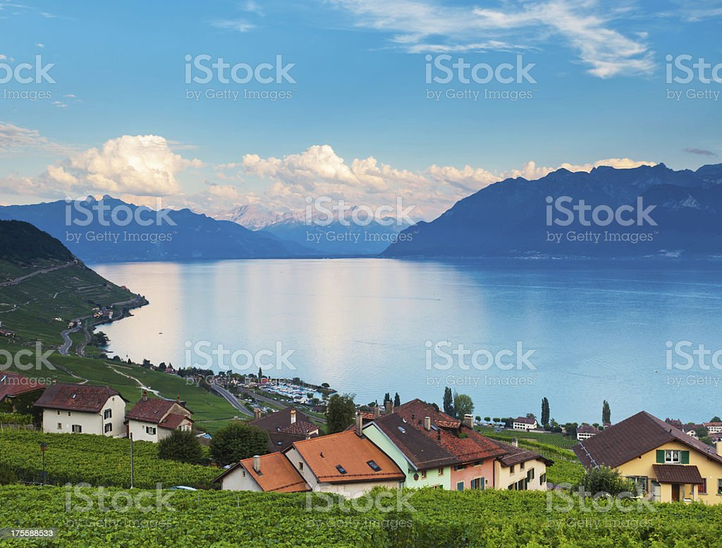 Panoramic view of vineyard and a lake at golden sunrise stock photo