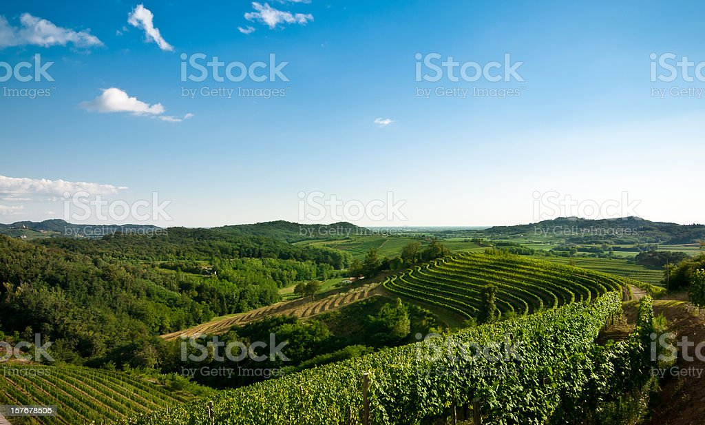 panoramic view of winery with clear sky stock photo