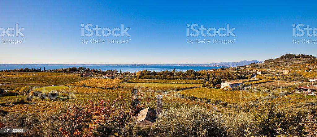 Panoramic View on Autumnal Vineyards stock photo