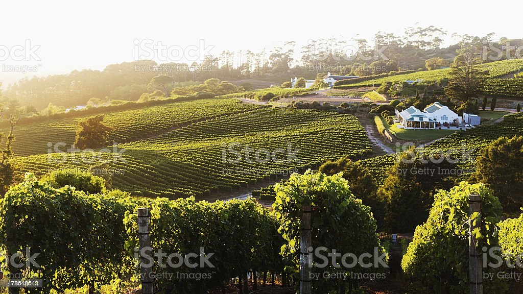 Panoramic view over a wine farm in Constantia, Cape Town. stock photo
