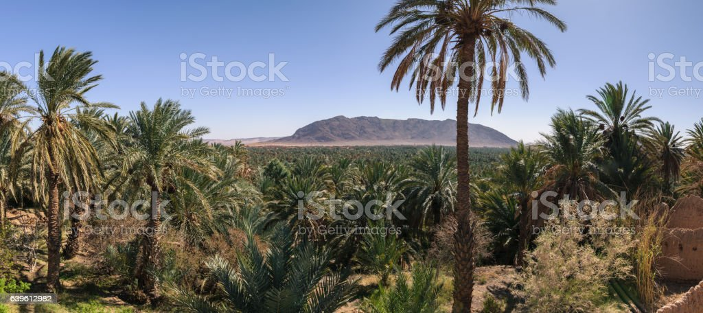 Panoramic view over oasis of date palms, Figuig, Morocco stock photo