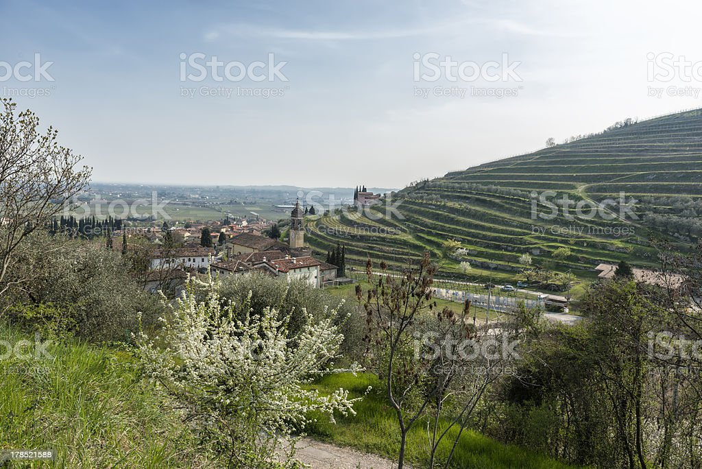 Panoramic view the vineyards in Valpolicella royalty-free stock photo