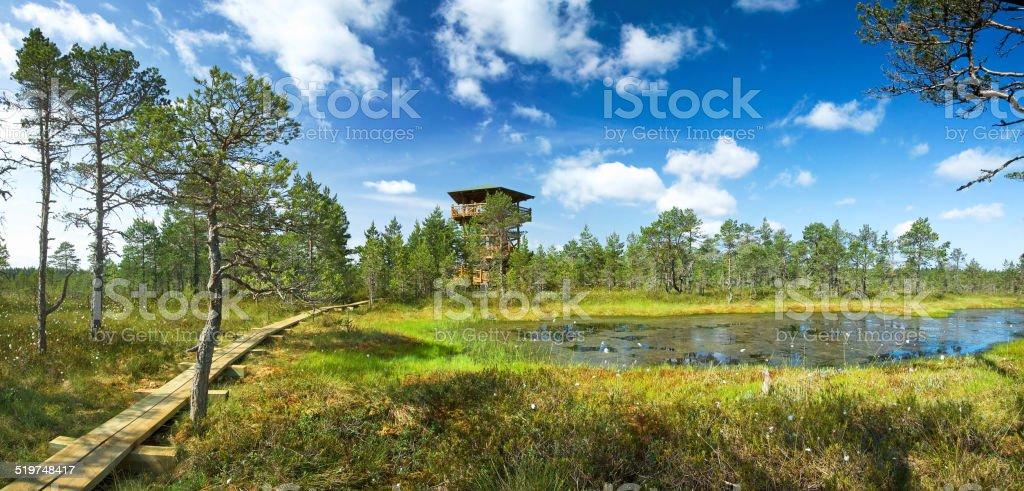 Panoramic view to Viru bogs stock photo