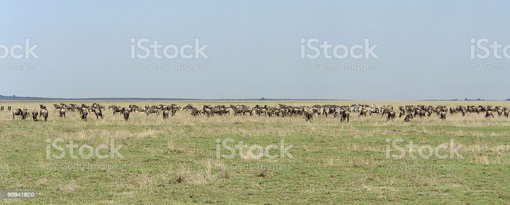 panoramic view with Serengeti animals royalty-free stock photo