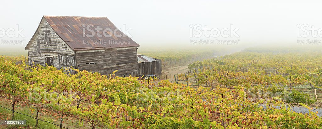 Panoramic Vineyard Landscape stock photo