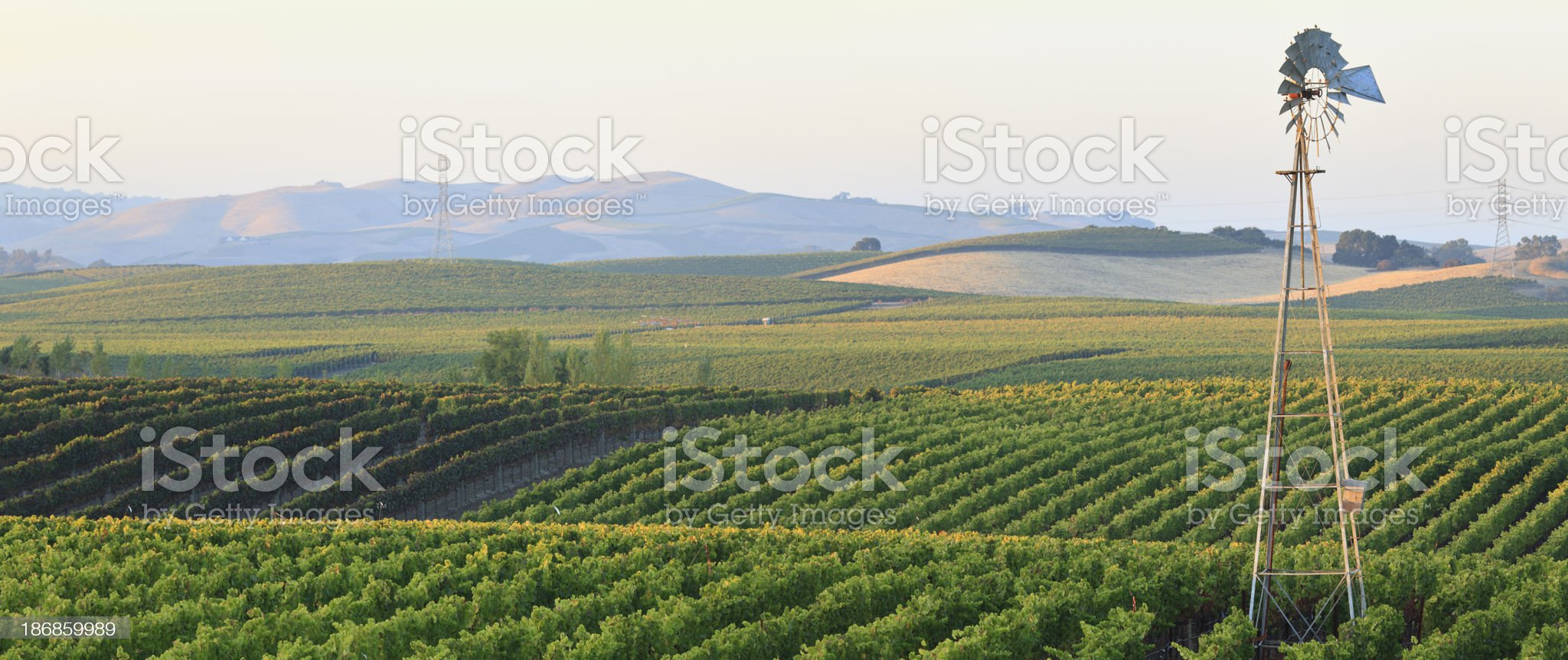 Panoramic Vineyard Landscape royalty-free stock photo
