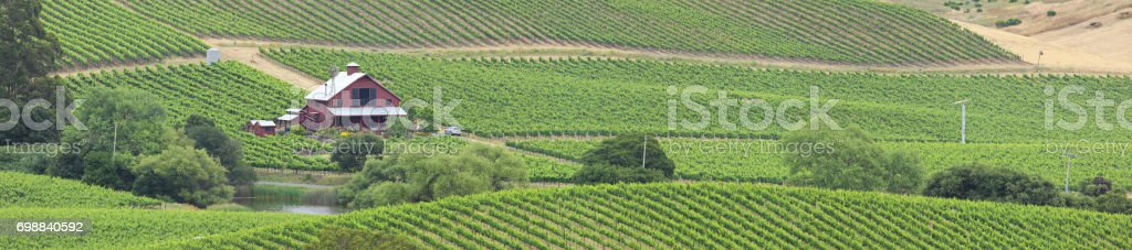 Panoramic Vineyard Landscape - Summer stock photo
