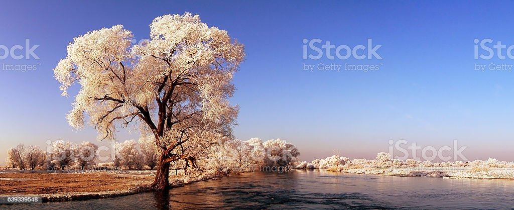 panormic winter landscape of Havel river stock photo