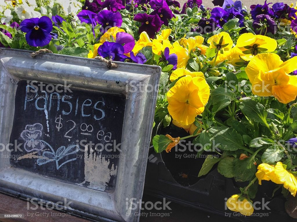 Pansies for sale stock photo