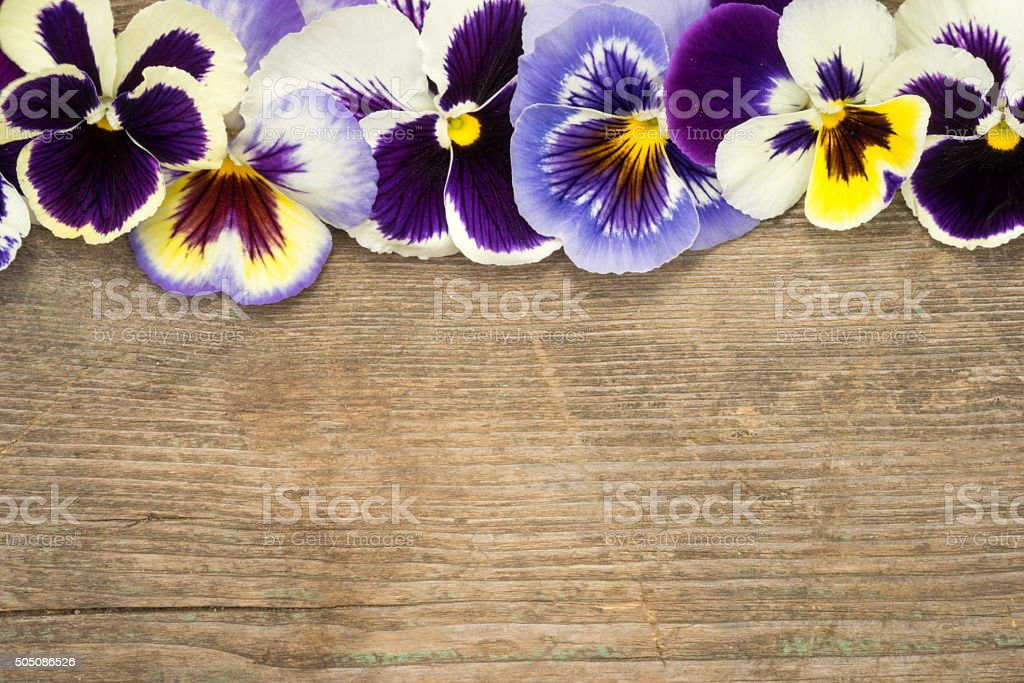 Pansy border of viola tricolor flowers on a wooden background stock photo