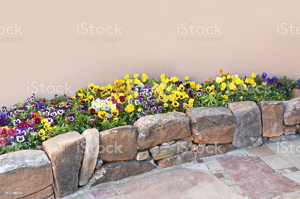 Pansy Flowers in Rock Garden with Flagstone Paving Stone royalty-free stock photo