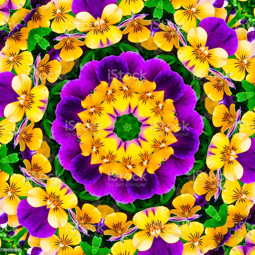 Pansy Mandala stock photo