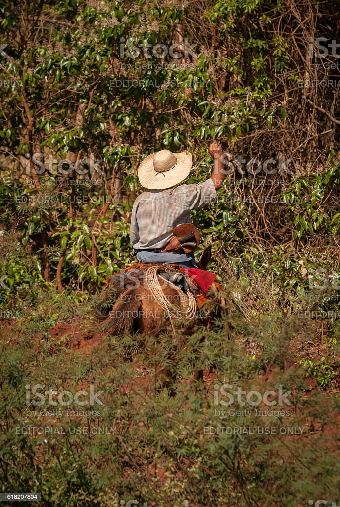 Pantanal - Brazil stock photo
