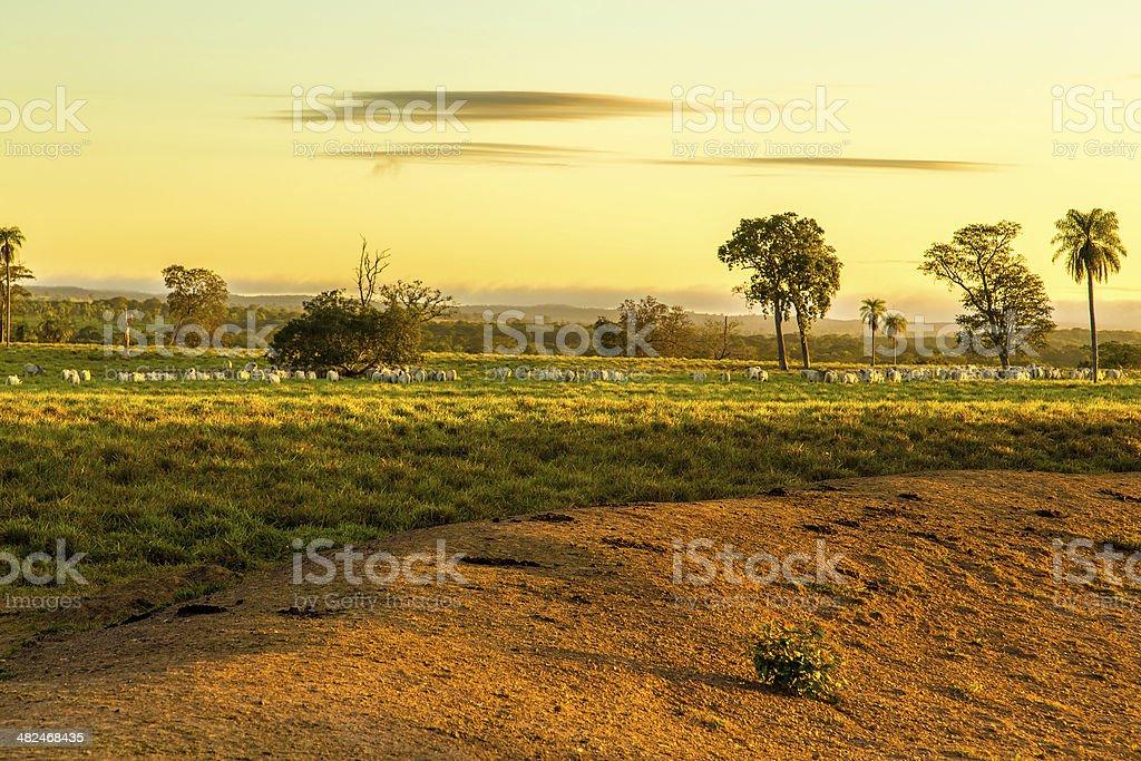 Pantanal landscape in Brazil, South America stock photo