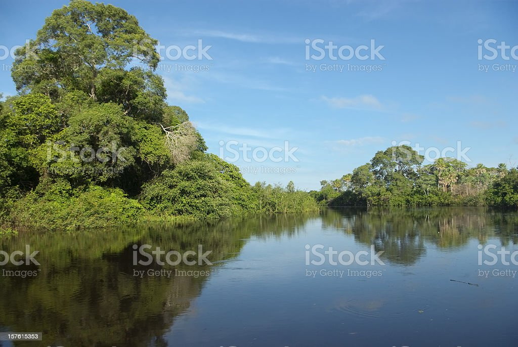 Pantanal wetlands, Brazil royalty-free stock photo