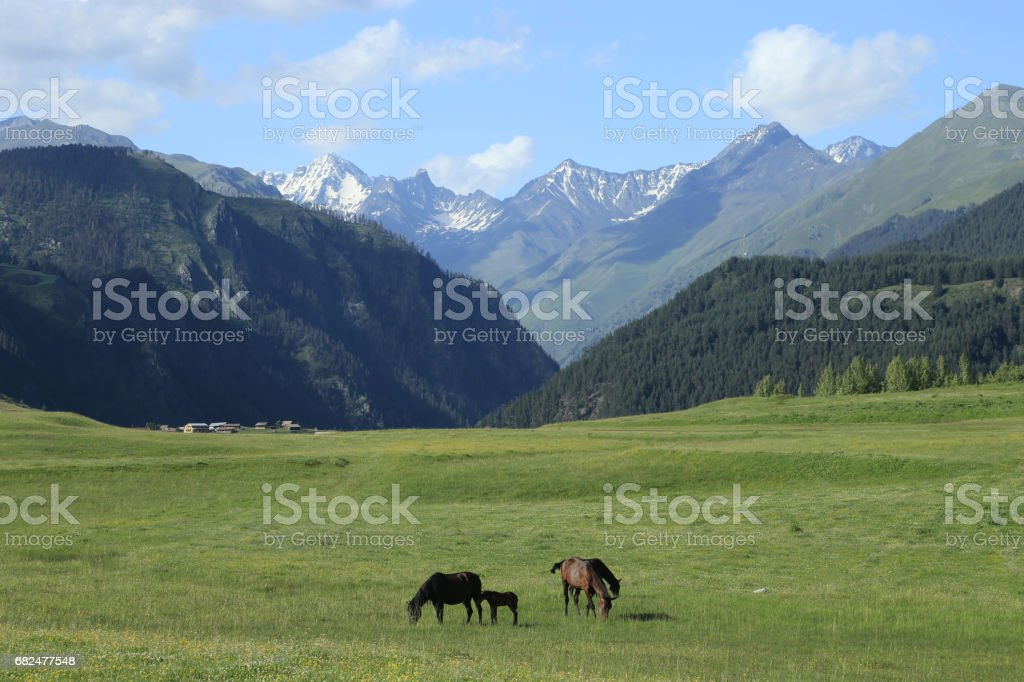 Paços horse on a background of peaceful rural landscape. stock photo