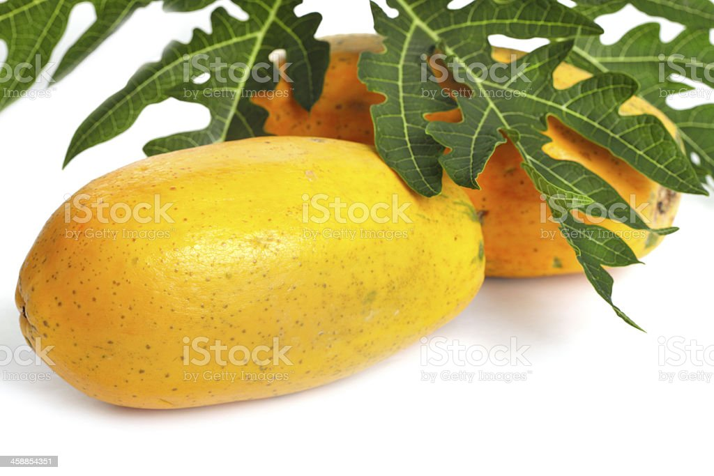 papaya  green leaf isolated on a white background royalty-free stock photo