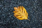 Papaya leaf on blue stone ground.