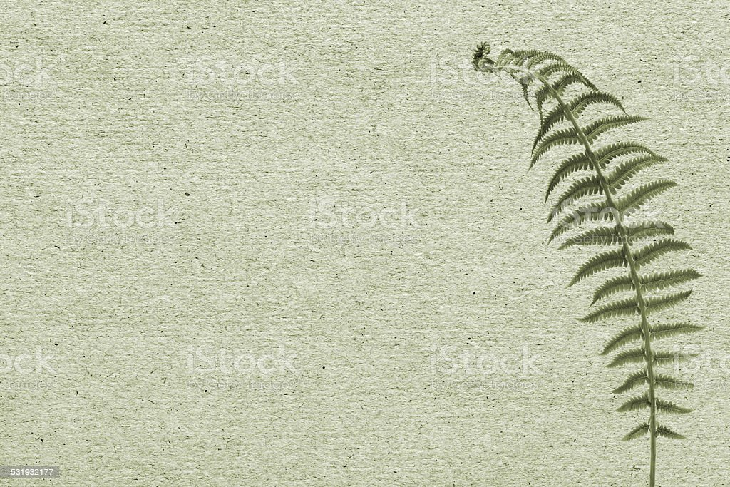 paper background with green leaf fern stock photo