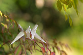Paper crane on the tree in garden