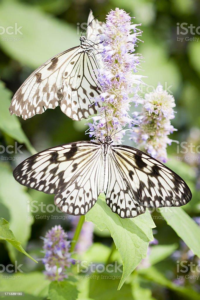 Paper Kite Butterflies royalty-free stock photo